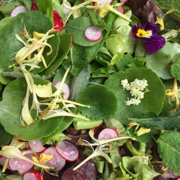 Salade de fleurs sauvages comestibles balade womoon